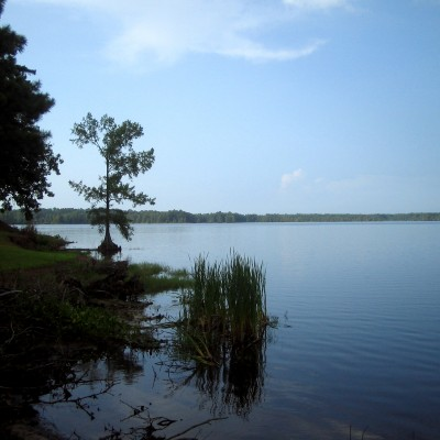 Lake Bogue Homa