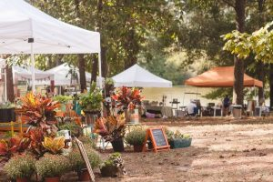 Fall Events in Jones County Mississippi at Cotton Gin Market